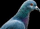 Tauben sind niedlich