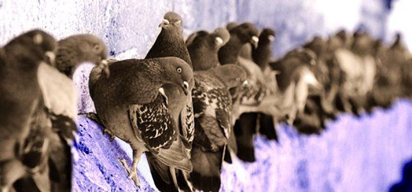 Taubenreihe_gefaerbt